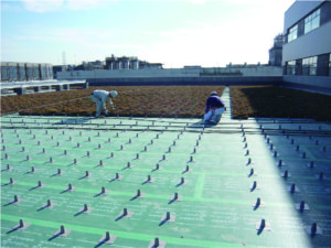 屋上緑化 施工場所:屋上・バルコニー等